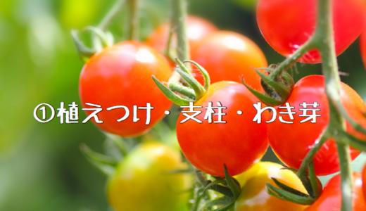 【2018年】ミニトマトの成長記録① ~植えつけ・支柱・わき芽~