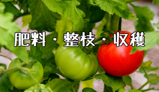 【2018年】大玉トマト桃太郎の成長記録② 〜肥料・整枝・収穫〜