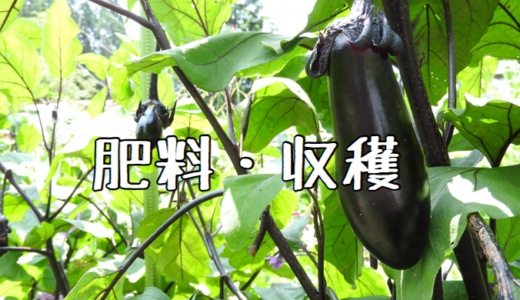 【2018年】ナスの成長記録② 〜肥料・収穫〜