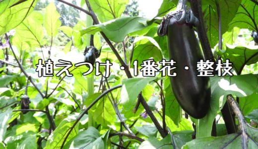 【2018年】ナスの成長記録① ~植えつけ・1番花・整枝~