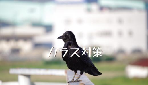 【2018年】大玉トマト桃太郎の成長記録③ ~カラス対策~