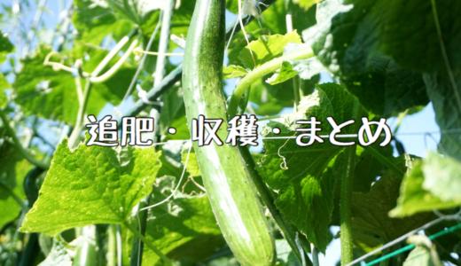 【2018年】きゅうりの成長記録② ~追肥・収穫・まとめ~