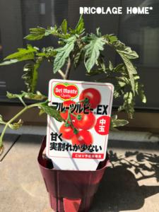 2019フルーツルビーEXの苗