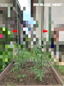 ミニトマトの支柱